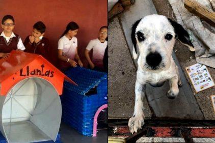 Escuela tiene como proyecto de clase hacer casas para perros sin hogar