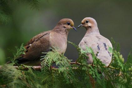 Estudia revela que el mundo se está quedando sin pájaros, ¡increíble!