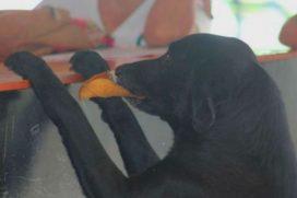 El perro que 'compra' galletas a diario y 'paga' con una hoja en Casanare