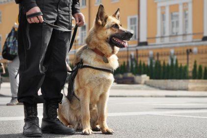 Retirarán de su trabajo a perros antinarcóticos en los colegios públicos, ¡se merecen ser felices y no trabajar!