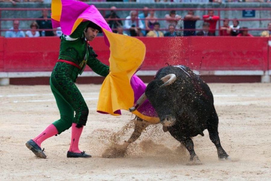 Medellín prohibe las corridas de toros para cuidar los derechos de los animales