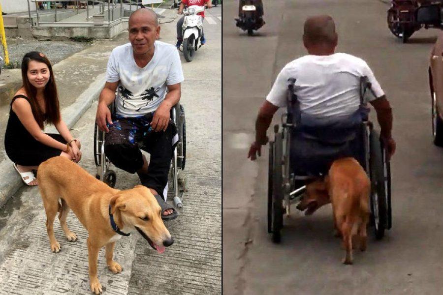 La historia del perrito que empuja silla de ruedas de su amo, ¡el motor de su vida!