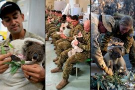 Militares en horas de descanso alimentan a koalas afectados por incendios