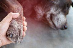 El dolor de perder a una mascota es tanto como por otro ser querido, según estudios