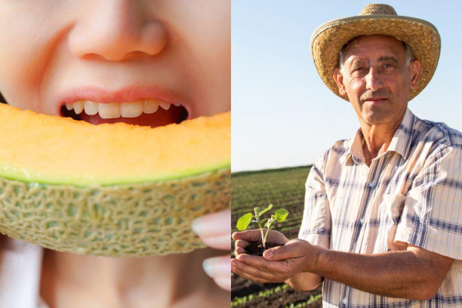 El melón sería más rentable si se usara menos fertilización química