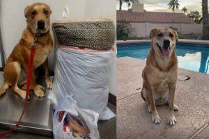 El perro que fue abandonado en un refugio con su cama y sus juguetes