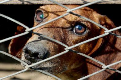 Dos ciudades colombianas con unidad forense contra el maltrato animal