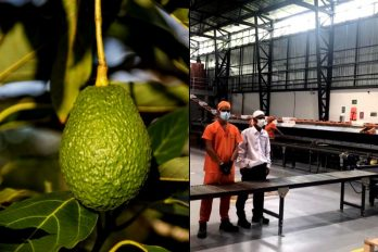 Colombia tiene la Primera planta empaquetadora de aguacate Hass y con tecnología de punta