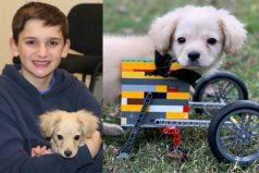 Un niño le regaló a un perro discapacitado una silla de ruedas hecha con legos