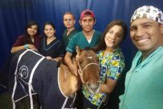 Caballo apuñalado y abandonado se salvó gracias a estudiantes en Boyacá