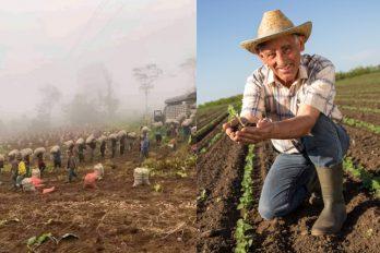 Campesinos, los otros héroes anónimos de Colombia durante la crisis por el COVID-19