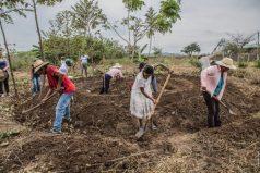 Campesinos ya no tendrán semillas transgénicas, ¡un triunfo para el país y el mundo!