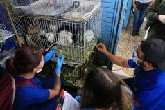 Cierran establecimientos de venta de animales vivos: un hito en Colombia