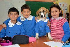 El perro callejero que usa uniforme y asiste a clase con los niños de la escuela