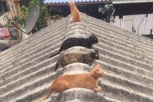 Gatos nos enseñan a tomar distancia para protegernos del contagio del COVID-19