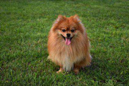 La verdadera historia detrás del perro con coronavirus que murió
