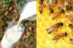 Las abejas están muriendo por la leche de almendras: cómo evitar este peligro