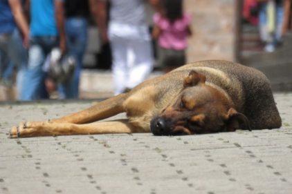 Perros y gatos abandonados por coronavirus mueren de hambre en las calles