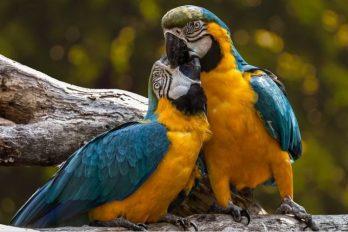 Prohiben enjaular y comercializar aves, ¡que vuelen libres y sean felices!