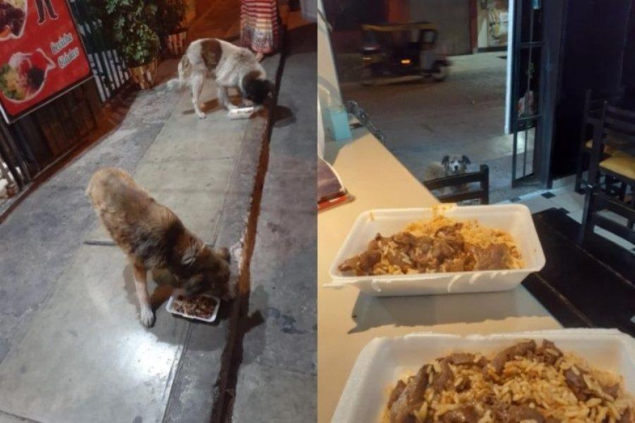 Restaurante guarda sus sobras y prepara menú especial para los perros callejeros