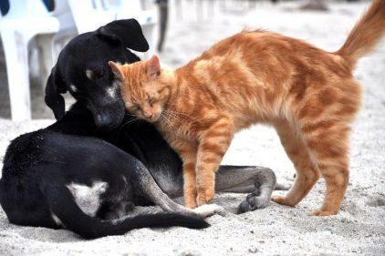Comer carne de perro y gato en Camboya y Vietnam, una polémica durante el COVID-19