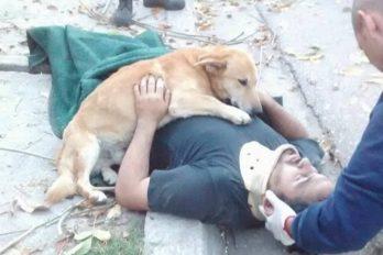 Perro cuida a su dueño mientras llegan los paramédicos, ¡conmovedor!