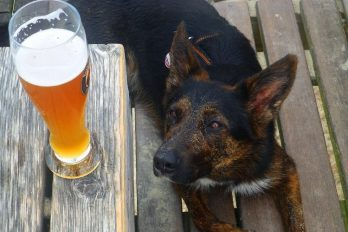 Ofrecen cerveza gratis durante tres meses a quien adopte a un perro