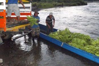 Indígenas donan alimentos a afectados por el COVID-19 ¡Qué generosidad!
