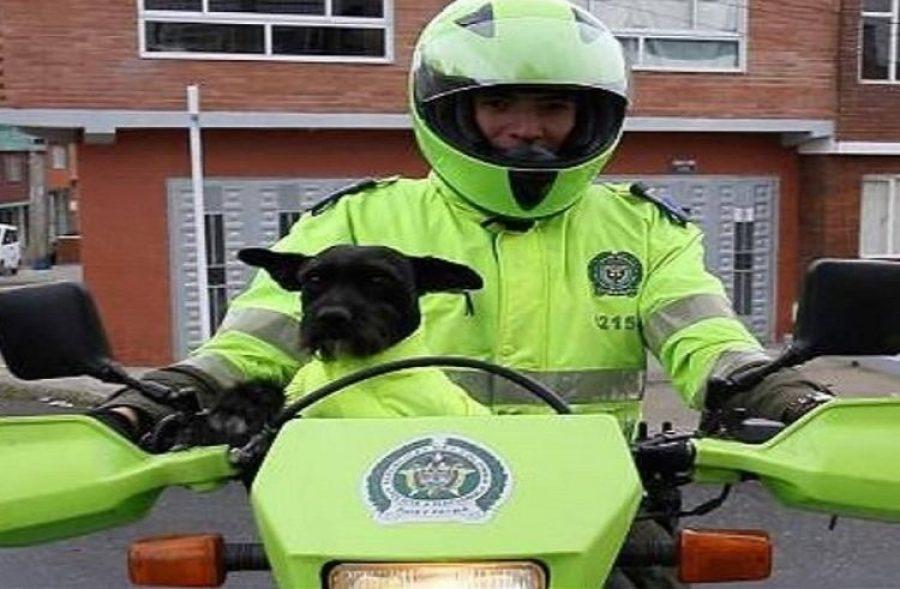 El adiós de 'Ñero', el perro policía que se robó el corazón de los colombianos