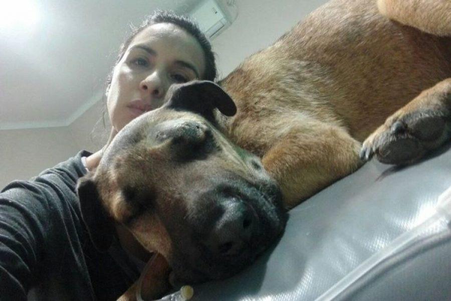 La historia de un valiente perro que enfrentó a una serpiente para salvar tres niños