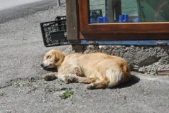 La historia del perro que espera afuera de un hospital a su amo