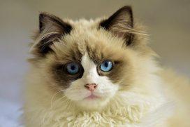 Prohiben definitivamente la experimentación con gatos: algunas pruebas eran terribles