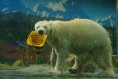 Zoológico evalúa sacrificar animales para alimentar a los otros por el COVID-19