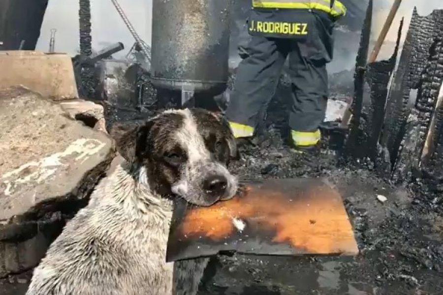 La triste historia del perro llora después de ver su casa destruida por incendio