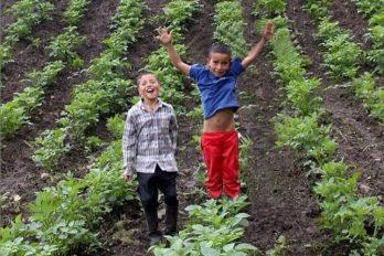 Campesinos crean canal de Youtube para enseñar a cultivar y sobrevivir a la crisis
