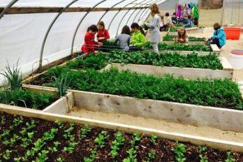 Cultivar sus propios alimentos será una materia obligatoria, ¡una idea inspiradora!