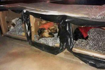 Anónimo fábrica cajas térmicas para perros callejeros, ¡gran historia!