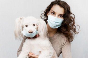 Confirman presencia del nuevo coronavirus en perros: la verdad explicada por veterinarios