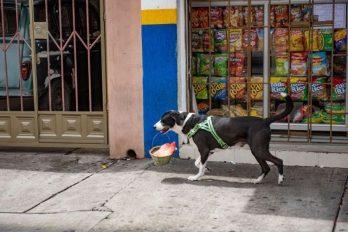 La historia del perro que hace domicilios en la cuarentena y es popular en su barrio