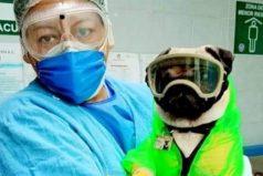 El perro que ayuda al personal médico de un hospital en su lucha contra el COVID-19