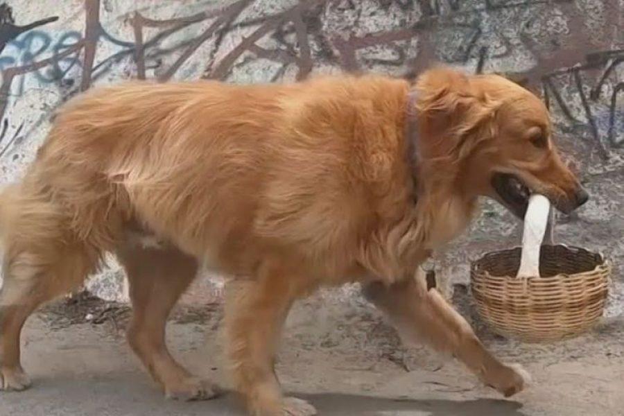 El perro que hace mercado en cuarentena y respeta la distancia ¡Qué ternura!
