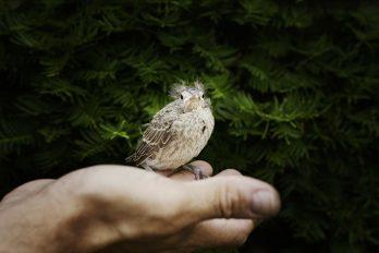 Hombre compra aves para darles la libertad, ¡aplausos de pie!