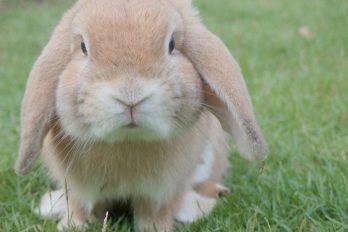 Prohíben importación, exportación y venta de sustancias probadas en animales