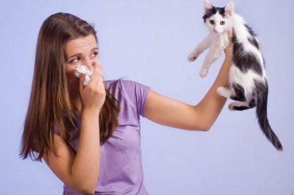 Alérgicos a gatos resisten más el COVID-19, según estudios ¡La razón es sorpresiva!