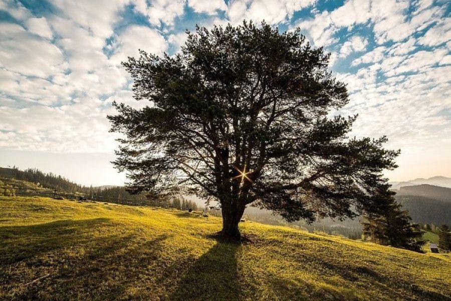 Crean cementerio ecológico donde el cuerpo del difunto pasa a ser un árbol