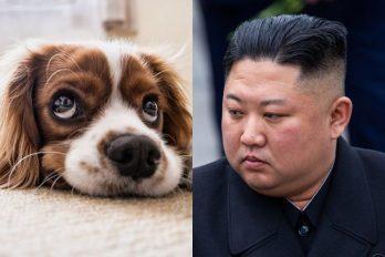 Corea del Norte decomisaría perros para hacerlos carne de restaurantes