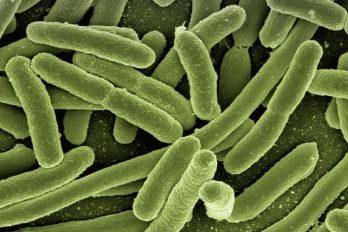 Bacteria que se fugó en un laboratorio en China deja cada vez más contagiados