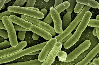 Bacteria se fugó en un laboratorio en China y dejó más de 3.000 enfermos