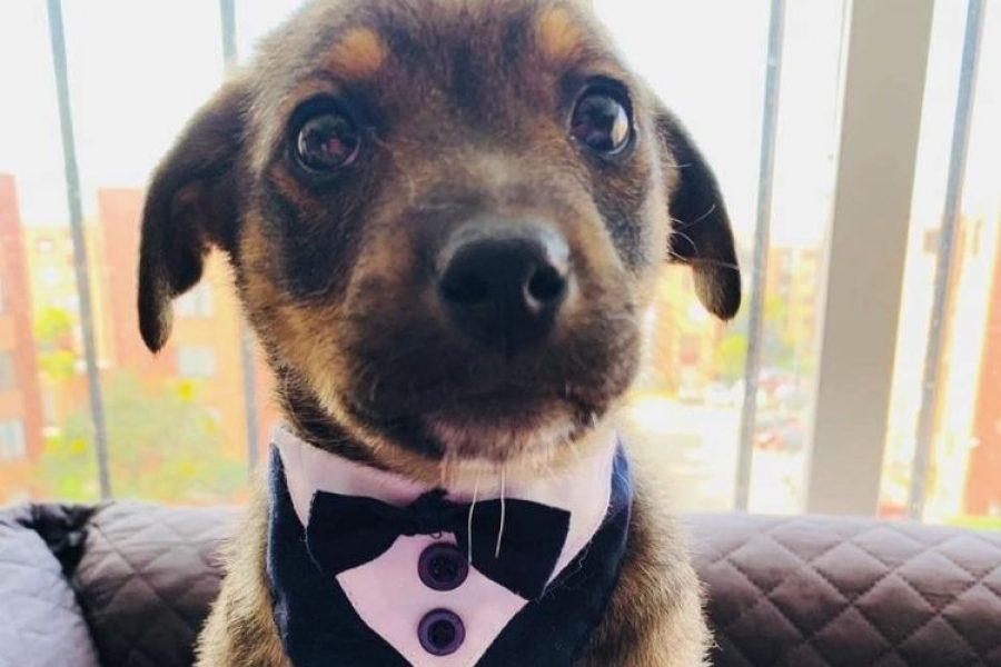 El perrito que dejaron 'vestido' el día de su adopción encontró un nuevo hogar