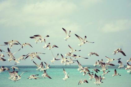 La solución simple para reducir en un 72% la muerte de aves en un parque eólico